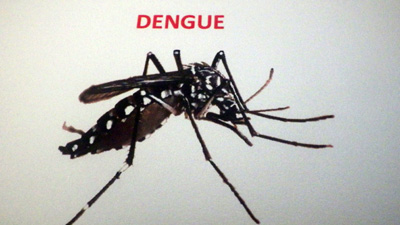 dengue-starts-attacking-the-children